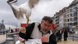 Bản tính hay cà khịa, giật đồ ăn của loài chim mòng biển