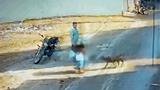 Video: Cụ ông bị 2 con chó Pitbull tấn công trên phố