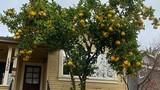 8 cây cảnh tốt cho phong thủy, trồng trước nhà xua tà khí, hút tài lộc