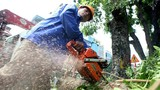 """Công ty Beepro """"biến mất"""", 106 cây cổ thụ ở đường Kim Mã bị di dời giờ ra sao?"""