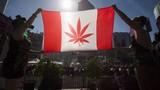 Vượt mặt Mỹ, Canada hợp pháp hóa cần sa từ tháng 10
