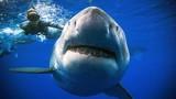 """Kinh ngạc thợ lặn bất ngờ chạm trán với """"sát thủ đại dương"""""""