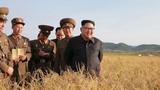 Tình báo Hàn Quốc: Dự trữ lương thực Triều Tiên không đủ dùng 1 năm