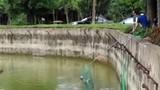 Nhân viên sở thú kịp thời cứu chú chó rơi xuống chuồng hổ
