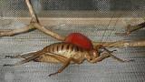 Những xứ sở của loài côn trùng khổng lồ