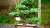 Chị em à, trồng 6 loại cây này trong nhà sẽ giúp cả nhà luôn vui vẻ