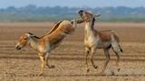 Những bức ảnh đẹp mê hồn về thế giới động vật hoang dã ở Ấn Độ