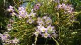 Kỹ thuật trồng và chăm sóc hoa lan rừng nở bung đón Tết