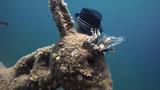 Video: Phát hiện bức tượng kỳ lạ đội mũ dưới đáy biển Ai Cập