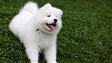 """Video: """"Chết mê"""" với khoảnh khắc đáng yêu của những chú chó"""