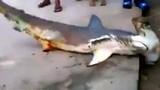 Video: Cá mập khổng lồ lên bờ, bị dân đánh đập đến chết