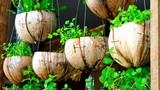 Các ý tưởng trồng cây xanh cực chất trong nhà