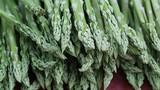 Vườn măng tây cho thu nhập hàng tỷ đồng mỗi năm