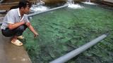 Những tỷ phú đưa cá nước lạnh lên Cổng Trời ở nơi âm u, huyền bí