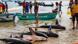 Nhu cầu của người TQ có thể tận diệt cá mập ngoài đại dương