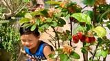 Ngắm khu vườn mini xanh mát nơi góc ban công nhỏ của Mỹ Lệ