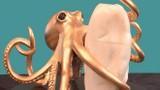 Video: Viên ngọc trai nặng 27 kg trị giá 200 triệu USD