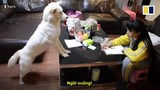Video: Bố huấn luyện chó cưng giám sát con gái học bài