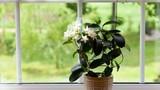 Video: 6 loại cây thanh lọc không khí trong phòng, giúp bạn ngủ ngon hơn