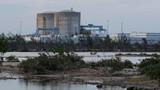 Cá sấu Mỹ bất ngờ sinh sôi mạnh quanh nhà máy hạt nhân