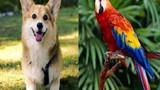 5 con vật nên nuôi trong nhà để hóa giải vận đen