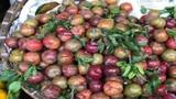 Mận đầu mùa giá 'chát', tiểu thương 'hét' giá 200 nghìn đồng/kg
