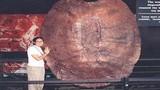 Phát hiện thủy tổ của rùa mặt đất khổng lồ