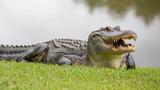 """Tử vong vì liều mạng """"vuốt ve"""", chụp ảnh với cá sấu"""
