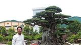 Anh bán hàng rong chi 16 tỷ mua cây sanh Tiên lão giáng trần