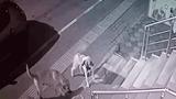 Video: Mèo 'đại chiến' 6 con chó nhà và diễn biến khó tin