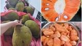 Mít ruột đỏ múi to dày, thơm ngọt 120.000 đồng/kg vẫn hút khách