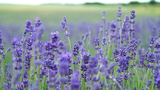 7 loài hoa giúp làm đẹp da