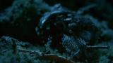 """Video: Ốc sên nổi loạn trên """"bàn tiệc"""""""