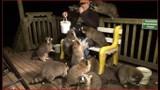 Đàn gấu xếp hàng xin ăn trước nhà vị cảnh sát về hưu