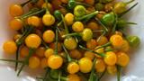 Bất ngờ loại ớt đắt nhất thế giới giá nửa tỷ một kg