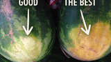 5 tuyệt chiêu chọn dưa hấu ngon của nông dân