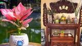 Cuối năm nhớ đặt 4 loại cây phát tài này lên bàn thờ tổ tiên