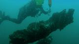 Phát hiện khu rừng 60.000 năm tuổi được tìm thấy dưới đáy biển