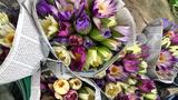 Hoa dại mọc hoang nay trở nên đắt đỏ