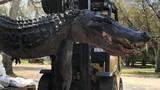 """Mổ bụng cá sấu """"quái vật"""", phát hiện lời giải cho nhiều vụ mất tích"""