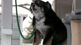 Chó trở thành triệu phú sau khi chủ qua đời
