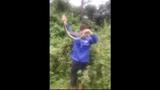 """Video: Dùng tay không bắt và lôi rắn """"khủng"""" từ trong bụi cây"""