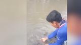 Cà Mau: Đàn cá chạy lên bờ xin thức ăn và chơi với ngư dân
