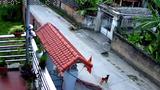 Video: Cẩu tặc đi xe máy quăng thòng lọng trộm chó trong 1 nốt nhạc