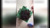 Video: Sinh vật bí ẩn có hàng trăm xúc tu ở Việt Nam lên báo Mỹ
