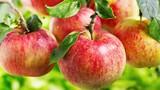 Ăn trái cây mùa thu giúp ngăn ngừa ung thư hiệu quả