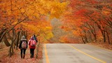 Mách bạn điểm chụp ảnh mùa thu Hàn Quốc đẹp lung linh