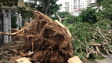 Hàng trăm cây xanh bật gốc trong KĐT Phú Mỹ Hưng