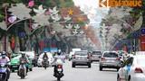 TPHCM rực rỡ cờ hoa trước ngày hội bầu cử