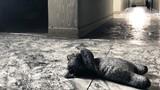 Cháy chung cư Carina Plaza: Nhói lòng bé gái tử vong cạnh gấu bông